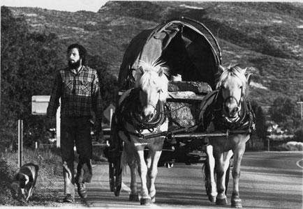 Colorado-horses