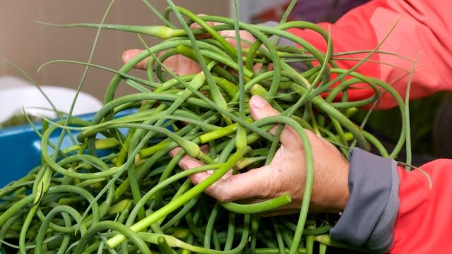 fleur d'ail, garlic flower, scape, scapes, harvest, farm